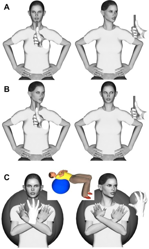 Oculomotor and head/eye proprioceptive exercises. A) Head-to-target or head movement following the target with the eyes in a neutral position. B) Eyes-to-target or eye movement following the target with different head positions. C) Head-to-target or head movement following the target with the eyes in a neutral position and the subject lying supine on a Swiss ball, with the head in a weight-dependent neutral position.