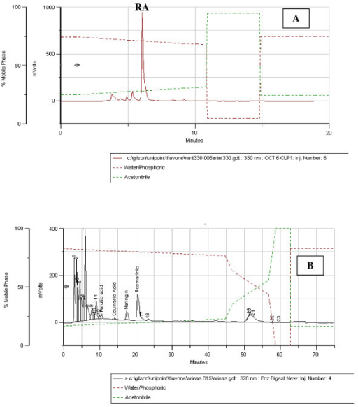 HPLC chromatogram of aqueous extract [A] and biological extract B] of High-Rosmarinic Acid Mint [HRAM]. [A] The major peak represents rosmarinic acid [RA] at a concentration of 130 ug/mL. [B] Retention times of compounds of interest: Caffeic acid = 6.00 min; Ferulic acid = 10.52 min; m-Coumaric acid = 14.10 min; Rosmarinic acid = 20.50 min.