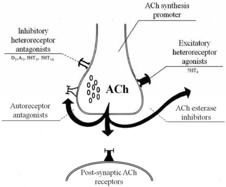 cholinergic system and cholinesterase inhibitors In the present study, we showed that pharmacological stimulation of cholinergic  system by acetylcholinesterase inhibitors suppressed.