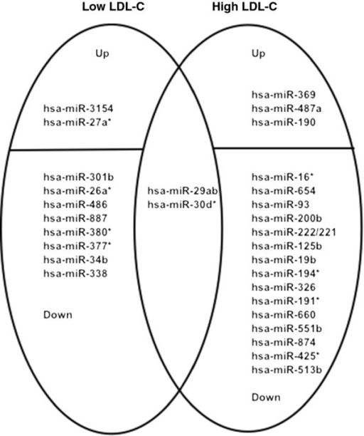 Dna and rna venn diagram for transferring all kind of wiring differences between dna and rna venn diagram smartdraw diagrams rh diagram premamaz com how are dna ccuart Choice Image