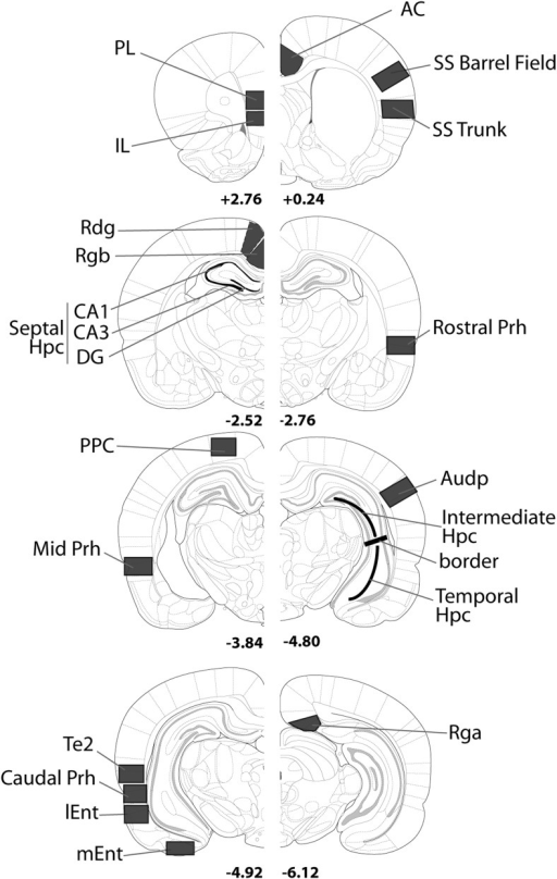 Coronal sections indicating the regions of interest. Abbreviations: AC = anterior cingulate cortex; Audp = primary auditory cortex; DG = dentate gyrus; dSub = dorsal subiculum; Hpc = hippocampus; IL = infralimbic cortex; lEnt = lateral entorhinal cortex; mEnt = medial entorhinal cortex; PL = prelimbic cortex; Prh = perirhinal cortex; Rdg = retrosplenial dysgranular cortex; Rga = retrosplenial granular; Rgb = retrosplenial granular; Te2 = cortical area Te2; Visp = primary visual cortex; vSub = ventral subiculum. The numbers refer to the distance (mm) from bregma. From The Rat Brain in Stereotaxic Coordinates (figures 12, 31, 54, 56, 65, 73, 74 and 84) by G. Paxinos and C. Watson, 2005