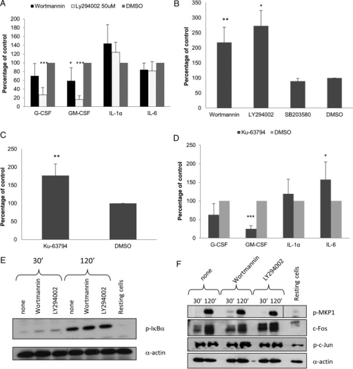 Inhibition of PI3K/Akt/mammalian target of rapamycin (mTOR) signaling induction in TR146 cells infected with Candida albicans. A, Effect of inhibition of PI3K/Akt signaling by 1 µM wortmannin or 50 µM LY294002 on cytokine production after 24 hours (multiplicity of infection [MOI] = 0.01) shown as percentage of the dimethyl sulfoxide (DMSO) vehicle control. B, Effect of inhibition of PI3K/Akt (wortmannin [1 µM] and LY294002 [50 µM]) or p38 (SB203580 [10 µM]) signaling on cell damage (lactate dehydrogenase [LDH] release) after 24 hours (MOI = 0.01) shown as percentage of the vehicle control (DMSO). C, Effect of inhibition of mTOR activity with 10 μM Ku-63794 on cell damage (LDH release) after 24 hours (MOI] = 0.01) shown as percentage of DMSO vehicle control. D, Effect of inhibition of mTOR activity with 10 μM Ku-63794 on cytokine production after 24 hours (MOI = 0.01) shown as percentage of the vehicle control (DMSO). E, Effect of inhibition of PI3K/Akt signaling by 1 µM wortmannin or 50 µM LY294002 on phosphorylation of IκBα 2 hours postinfection (MOI = 10). F, Effect of inhibition of PI3K/Akt signaling by 1 µM wortmannin or 50 µM LY294002 on phosphorylation of MKP1 and c-Jun and on the production of c-Fos 2 hours postinfection (MOI = 10). Candida albicans was added as 100% yeast, which switched to hyphal growth by 2 hours postinfection. Data are the mean (A–D) or representative (E and F) of at least 3 independent experiments. *P < .05, **P < .01, ***P < .001. Abbreviations: G-CSF, granulocyte colony-stimulating factor; GM-CSF, granulocyte macrophage colony-stimulating factor; IL, interleukin.