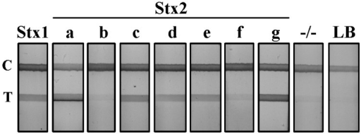 Detection of shiga toxins from STEC serotypes by lateral flow assay (LFA). Supernatant from Stx1 and seven variant Stx2-producing STEC cultures were diluted 1:5 in PBS and evaluated using the Stx LFA. −/−, a non-Stx-producing E. coli serotype; LB, Luria broth; T, test line; C, control line.
