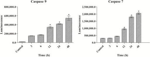Effect of polycerasoidin on caspase 9 and 7 activities assessed through bioluminescent analysis.MCF7 cells were treated with IC50 concentration of polycerasoidin for 3, 6, 12, 24 and 48 h. The results showed a time-dependent elevation of caspase 9 and 7 activities. The data are shown as the means ± SEM. Values are statistically significant at *P<0.05.