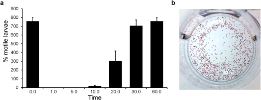 The proposed biological role of murexine in the D. orbita egg capsules using a larval motility assay in the presence of 50 ppm murexine extract:(a) percentage of motile larvae counted using short 30 s videos over 60 min and (b) a video still shot of larvae at time 0 prior to the addition of murexine extract (video online: https://youtu.be/rlCvyyhnXAE).