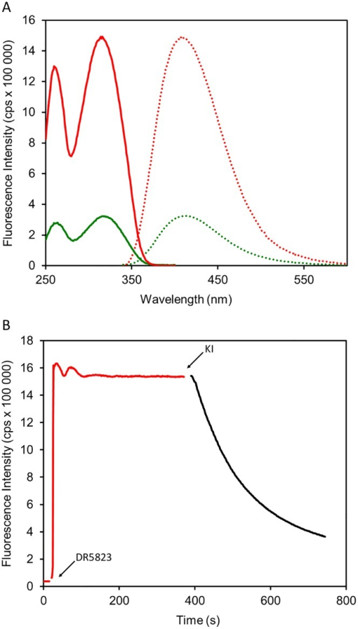Interaction of fluorescently labeled LPPO DR5823 with model membrane.(A) Excitation (solid line) and emission (dotted line) spectra of DR5823 in buffer (in green) and liposomes (in red). (B) Incorporation of DR5823 to the liposome membrane.