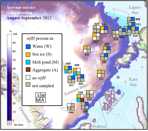 Stations sampled for nifH analysis in the Eurasian Basin of the Central Arctic during summer 2012. Station numbers correspond to those in Supplementary Table S1. Each square correspond to one environment. If a particular environment was not samples at one station it appears in gray. If no nifH gene could be amplified it is colored in white, and if niH genes could be amplified in the color corresponding to each environment (Dark blue = water, Yellow = sea ice, Light Blue = melt pond and Brown = algal aggregates). The thin gray line corresponds to the cruise track. Average sea-ice concentration data source: www.meereisportal.de.