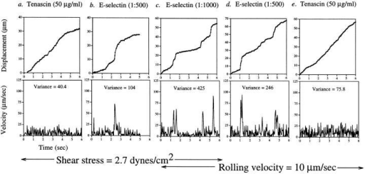 Rolling on tenascin is smoother than rolling on E-selectin at all shear stresses examined. (a–c) Displacement and velocity profiles of cells rolling on tenascin and E-selectin at 2.7 dynes/cm2 shear stress. (c–e) Change in velocity profiles of cells rolling on tenascin  and E-selectin at 10 μm/s. The variance of velocity measurements is as shown.