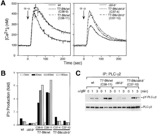 Role of Cbl-b on Btk-dependent Ca2+ mobilization, IP3 production, and tyrosine phosphorylation of PLC-γ2. Wild-type cells, Cbl-b–deficient cells, wild-type cells expressing T7-tagged Btk (C38-9 and C38-11), and Cbl-b–deficient cells expressing T7-tagged Btk (C37-4 and C37-10) were analyzed for (A) BCR-induced Ca2+ mobilization, (B) IP3 production, and (C) tyrosine phosphorylation of PLC-γ2, as described in Fig. 2. Similar results were obtained using two other Cbl-b–deficient clones. All experiments were performed more than three times.