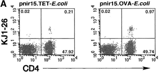 OVA-expressing E. coli induce clonal expansion of DO11.10 T cells in vivo. DO11.10/BALB/c adoptive transfer recipients were challenged with a single intravenous injection of 106 viable pnir15.OVA-E. coli or pnir15.TET-E. coli. Two-color flow cytometric analysis was performed on splenic or pooled peripheral lymph node lymphocytes isolated at the indicated times after immunization as described in Materials and Methods. The percentages of KJ1–26+CD4+ cells in the lymphocyte gate were determined and used to calculate the total number of splenic KJ1–26+ CD4+ as described previously (reference 36). (A) Representative flow cytometric profiles for lymph node lymphocytes isolated 5 d after challenge with pnir15.TET-E. coli (left) or pnir15.OVA-E. coli (right). The percentages of total gated cells in each quadrant are indicated. (B) Kinetics of clonal expansion of total splenic KJ1–26+CD4+ T cells induced by pnir15.OVA-E. coli versus control pnir15.TET-E. coli. Data points are the mean ± SD of 3–4 animals per group.