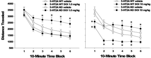 Effect of 5-HT2A gene deletion on the locomotor response to DOI. Effect of vehicle or 1 mg/kg DOI (left panel) or vehicle or 10 mg/kg DOI (right panel) on distance traveled (in cm) in male and female 5-HT2A WT and KO mice. Data are mean±SEM. *p<0.025 compared to vehicle control