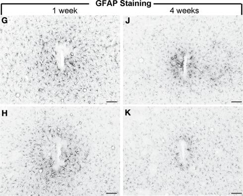 GFAP reactivity of uncoated silicon microelectrodes (G, J) and an anti-inflammatory peptide (α-MSH) tethered electrode (H, K) following 1 week and 4 weeks of implantation in rats. The α-MSH coated electrodes elicited mitigated astrocytic and microglial reactivity (not shown here) indicating bioactivity of the coated implant. Scale Bar = 100 μm. Images reprinted from He et al. (2007). Copyright Wiley-VCH Verlag GmbH & Co. KGaA 2007. Reproduced with permission.