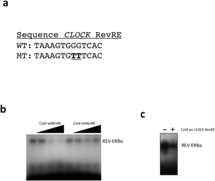 Identification of a functional RevRE within the CLOCK gene by EMSA.(a) The sequences of the wild-type CLOCK RevRE and mutant CLOCK RevRE are shown. (b) Demonstration of direct binding of REV-ERBα to radiolabeled CLOCK RevRE DNA. Binding of REV-ERBα to labeled DNA decreased with addition of unlabeled (cold) CLOCK RevRE, but not mutant CLOCK RevRE. The arrow indicates increases amounts of cold DNA added (10×, 50×, and 100× molar excess). (c) EMSA illustrating that REV-ERBα binds to radiolabeled BMAL1 RevRE and that 100-fold molar excess of CLOCK RevRE DNA can compete for binding to REV-ERBα.