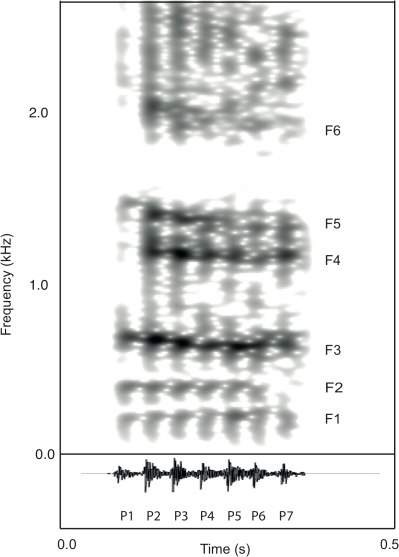 Spectrogram (A) and waveform (B) of a male fallow deer groan.Male fallow deer groans are low-pitched vocalisations characterised by a rapid downward shift in formant frequencies across the call (spectrogram settings: FFT method, window length = 0.05 s, time step = 0.01 s, Gaussian window shape, dynamic range = 30 dB).