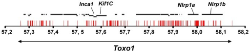 Allelic variations in Toxo1 correlating with toxoplasmosis resistance.Sequencing of Toxo1 (between 57.26 and 58.15 Mb) revealed 373 SNPs (red bars) conserved in coding- and non-coding sequences of all resistant strains and missing in susceptible strains. The diagram illustrates the distribution of these SNPs along the sequence of Toxo1 (indicated by the double arrow in the lower part). In the upper part, the 29 genes are represented by black bold lines. The four genes named Inca1, Kif1C, Nlrp1a and Nlrp1b display missense mutations.