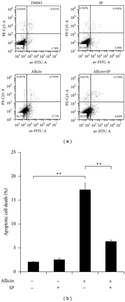 Flow cytometry analysis of allicin and/or SP600125 in SKOV3 cell apoptosis. SKOV3 cells were pretreated with 20 μM SP600125 for 30 min before incubation with 25 μg/mL of allicin, and apoptotic cells were measured by cytometry after 48 h. Data (mean ± SD) are representative of three experiments. (a) is a representative figure and (b) is a statistical graph. Asterisks indicate statistically significant difference (**P < 0.01).