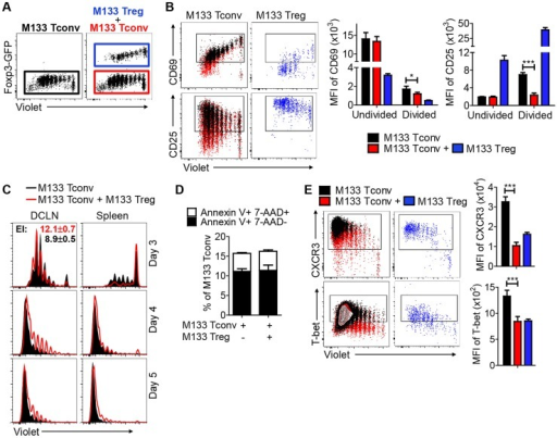 M133 Tregs inhibit M133 Tconv proliferation in, and egress from, the DCLN.M133 Tconv or M133 Tconv and M133 Tregs (1∶2 ratio) were labeled with Violet and transferred into Thy1 congenic mice prior to rJ2.2 infection as described in Figure 5A. Organs were harvested at the indicated time points and lymphocyte populations examined directly ex vivo. (A) Representative plots showing gating of transferred M133 Tconv (GFP−) in the absence (black) or presence of (red) co-transferred M133 Tregs, and of M133 Tregs (GFP+, blue). These gates and colors were applied in B–E. (B) Representative dot plots show CD69 and CD25 expression on M133 Tconv and M133 Tregs in DCLN at day 3 p.i. Boxed cells are positive for CD69 or CD25 expression. Summary data show expression levels of CD69 and CD25 on undivided and divided M133 Tconv. (C) Overlayed histograms showing proliferation of M133 Tconv in the absence or presence of co-transferred M133 Tregs in DCLN and spleen at days 3, 4 and 5 p.i. Expansion index (EI) of M133 Tconv was calculated using Flowjo software. (D) Apoptosis of M133 Tconv in the DCLN at day 4 p.i. was analyzed by Annexin V/7-AAD staining. (E) CXCR3 and Tbet levels on M133 Tconv and M133 Tregs in DCLN at day 4 p.i. The data in B-E are representative of 2–6 independent experiments with 3–5 mice/time point. *P<0.05, ***P<0.001.