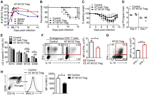 Transferred M133 Tregs enhance survival and diminish the M133 Tconv immune response in the brain.105 M133 Tregs, bulk Tregs or B6-derived Foxp3−CD4 T cells (control group) were transferred to Thy1 congenic mice one day prior to rJ2.2 infection. (A) M133 Treg numbers in spleen, DCLN and brain of recipient mice from days 0 to 41 p.i. (B–D) Survival (B), weight loss (C) and viral titers in the brains (D) of recipient mice were monitored. 18–22 mice in 4 independent experiments were analyzed for survival and weight loss. In (C), *P<0.05, **P<0.01 weights of M133 Treg recipients compared to mice that received bulk Tregs or control cells; (E–G) Lymphocytes were prepared from brains of recipient mice at day 7 p.i. and stimulated with the indicated peptides. (E) Frequencies of S510 and S598-specific cells within the CD8 T cell population and M133- and S358-specific cells within the CD4 T cell population are shown. 6–10 mice in 3–5 independent experiments were analyzed. (F) Brain-derived lymphocytes were harvested from mice that received control cells or M133 Tregs. Representative dot plots show IFN-γ and IL-10 expression by endogenous CD4 T cells after M133 peptide stimulation. Summary data show expression levels of IFN-γ by M133-specific CD4 T cells in the absence (black) or presence (red) of M133 Treg. (G) Representative dot plots (from the same sample as in F (right hand dot plot)) show IFN-γ and IL-10 expression by exogenous M133 Tregs. Note that lower levels of IFN-γ were expressed by M133 Tregs when compared to Tconv. Summary data show expression levels of IL-10 by IFN-γ- (black) and IFN-γ+ M133 Tregs (red). Data in (F) and (G) are representative of three independent experiments with at least 3 mice/group. (H) Expression levels of MHC II on brain microglia at day 7 p.i. Data are representative of three independent experiments with 3–5 mice/group. *P<0.05, **P<0.01, ***P<0.001.