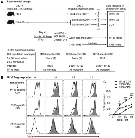 M133 Tregs preferentially inhibit proliferation of M133-specific Tconvs in an in vitro suppression assay.(A) Experimental design. M133, S358 and S510-specific T cells were obtained from infected mice, labeled as described in Materials and Methods and used as responder cells. M133-specific Tregs were pre-activated in vitro for 24 hours and co-cultured with the labeled responders and irradiated antigen presenting cells (CHB3 cells). Cells were stimulated with the indicated peptides for 66 hours and then analyzed for Violet dilution. (B) Representative histograms showing proliferation of responders in the absence (open) or presence (shaded) of M133 Tregs. (C) Summary of data from 3 rJ2.2 and 3 rJ2.2.MY135Q-infected mice. *P<0.05, **P<0.01, ***P<0.001, M133 or S358 suppression compared to S510 suppression; #P<0.05, ###P<0.001, M133 suppression compared to S358 suppression.