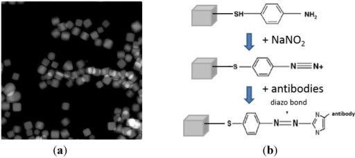 (a) Silver nanocubes used to make molecular probes (STEM image); (b) Reaction scheme to functionalize silver nanocubes with anti-E. coli antibodies.