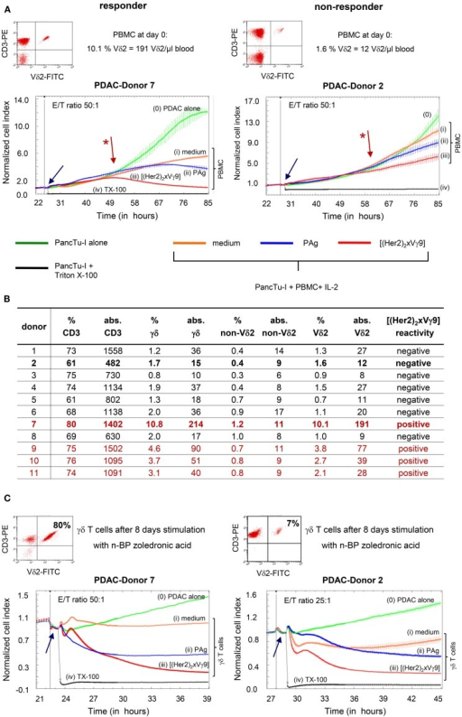 Correlation between absolute cell number and functional capacity of Vδ2 T cells. (A) Flow cytometric analysis of CD3+ Vδ2+ γδTc within PBMC, and RTCA of PBMC from two representative donors (Donors 7 and 2) of 21; (B) list of the relative and absolute numbers (abs.) of CD3, γδ, Vδ2, and non-Vδ2 T cells in whole blood from 11 representative PDAC patients out of 21 as well as reactivity to the tribody; (C) flow cytometric analysis of selective expansion of CD3+ Vδ2+ γδTc after PAg-activation within PBMC for 8 days, and RTCA with these short-term expanded γδTc from Donors 7 and 2. Two representative donors of 21 are shown. (A,C) For RTCA, 5 × 103 PDAC cells (PancTu-I) were cultured in 10% FCS RPMI medium for 24–27 h on an E-plate covered at the bottom with electronic sensors that measure the impedance of the cells expressed as an arbitrary unit called cell index (CI). The CI was analyzed every 5 min to determine adherence and thus cell growth. Since the initial adherence in different wells can differ slightly, the CI was normalized to 1 shortly before the time of addition of suspended cells ± substances (vertical black line). After 24–27 h, PDAC cells were treated again with medium [green line (0)] or with PBMC (A) or short-term expanded γδTc (C) together with medium [orange line (i)], 300 nM PAg BrHPP [dark blue line (ii)], or 1 μg/ml [(Her2)2xVγ9)] [red line (iii)] at the indicated E:T ratio over the indicated time. As a positive control for maximal lysis, PDAC cells were treated with Triton X-100 [TX-100, black line (iv)]. The addition of substances, PBMC or expanded γδTc is indicated by the blue arrow. CI was then measured every minute for analysis of precise cytotoxicity time point for >15 to 55 h as indicated. The loss of tumor cell impedance and thus a decrease of the Normalized CI correlates with γδ T cell-mediated lysis of PDAC cells. The red arrow with the * points out the initiation of cytotoxicity. The average of triplicates and standard deviation were calculated; one representative experiment is shown.