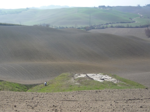 Field sampling with yellow pan traps in Tuscany claystones (courtesy of D. Inclán).