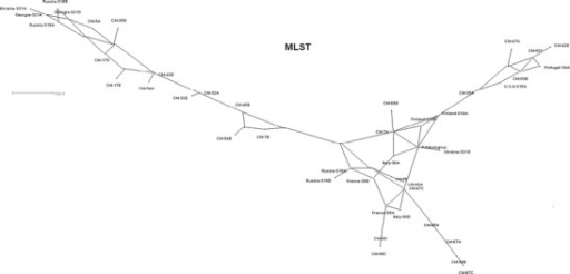 Median-joining network of Wolbachia strains in P. spumarius obtained by SplitTree4 for joined MLST genes