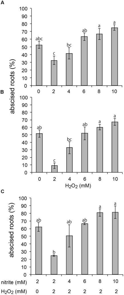 Combined effect of nitrite and H2O2 on root abscission of Azolla pinnata plants. Abscission was measured 90 min after 2 mM nitrite was added. 2, 4, 6, 8, or 10 mM H2O2 were added (A) simultaneous with or (B) 60 min before addition of nitrite. (C) 2 mM H2O2 was added simultaneously with 2, 4, 6, 8, or 10 mM nitrite (A, n = 7; B, n = 8, C, n = 2, mean ± SE; means with the same letter are not significantly different).