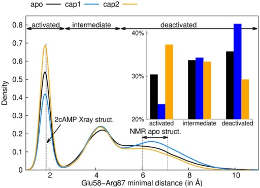 Glu58 and Arg87 minimal distance decreases upon activation.Probability distribution of the minimal distance between Glu68 and Arg87 for apo (black), cap1 (blue) and cap2 (orange) states. Both protomers were taken into account. Vertical dashed lines represent the respective values as observed in the cap2 X-ray structure (1G6N) and the range covered in the apo NMR structures (2WC2 [25]). The integration limits used in the inset for the three states (activated, intermediate and deactivated) have been determined by the two inflection points of the cap2 distribution (2.71 and 5.11 for intermediate and deactivated respectively).