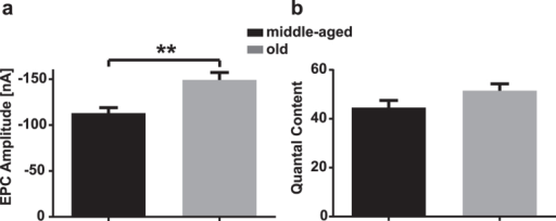 Evoked release at diaphragm NMJs in middle-aged and old mice.(a) Comparison of mean EPC Amplitude between middle-aged and old animals; P = 0.001. (b) Comparison of mean quantal content between middle-aged and old animals. P > 0.05.Values show mean ± SEM.