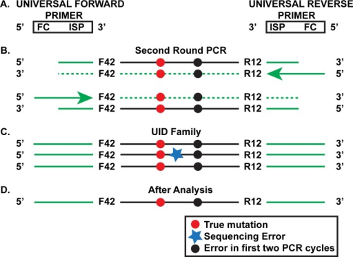 Second Round of the SSS Strategy.a. Universal forward and reverse primers are used to amplify the product made in the first round of PCR (see Fig 1E). The primers contain the Illumina Sequencing primer (ISP), which is partially complementary to the Sequencing primer region of the primers used in the first two PCR cycles (Fig 1A). The universal primers also contain the complement of the Flow cell grafting sequence (FC). b. Products of the first few cycles of the second round using the template shown in Fig 1E. c. Further amplification for 28–30 additional cycles leads to the creation of UID families of which the one shown is representative. The original genomic mutation and the mutation that arose during the first two SSS PCR cycles are both present in this particular family. Notice that one of the family members has accumulated an additional in vitro mutation (black star) due to events during the second PCR round or the final sequencing step. d. Analysis of the UID family is able to eliminate the latter error from consideration.