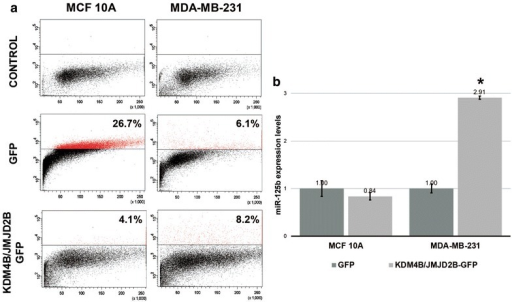 JMJD2B over-expression reactivates miR-125b in MDA-MB-231 breast cancer cells. To determine if H3K9me3 is involved in miR-125b-1 repression, we over-expressed JMJD2B in MCF10A and MDA-MB-231 breast cells and then selected cells over-expressing JMJD2B by sorting (a). After the selection, we evaluated the expression levels of miR-125b (b)