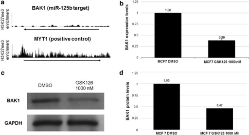 Elevated levels of miR-125b-1 affect the expression levels of BAK1. The target BAK1 was selected based on an evaluation of H3K27me3 enrichment in MCF7 cells by ENCODE (a). Next, we evaluated BAK1 expression levels by qRT-PCR (b). Finally, we determined protein levels by Western blotting (c, d). n = 3 *p > 0.05