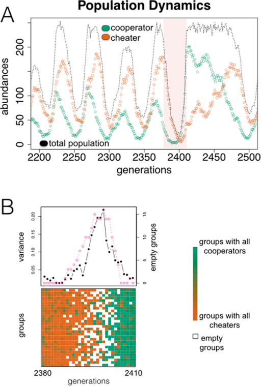 "Exploitation by cheaters contributes to the rescue of cooperation.(A) Typical population dynamics obtained with an in silico model of a microbial community, which is organized as a transient metapopulation (Fig. S1) (Materials and Methods). Growth depends on an essential public good produced by the ""cooperator"" individuals. When ""cheaters"" invade, the decline in the amount of public good drives the collapse of the total population. This collapse paradoxically determines its subsequent revival. (B) Revival is coupled to the endogenous emergence of variability in the composition of the groups (constituting the metapopulation) when the population is falling1221, and the following occurrence of groups only constituted by cooperators. For the time window highlighted in (A), we display group composition (bottom; ratio of cooperators on each group is colored according to the gradient shown; white squares denote empty groups, of a total of N = 30), intergroup diversity (top; black curve, quantified as variance in group composition), and number of empty groups (top; pink curve)."