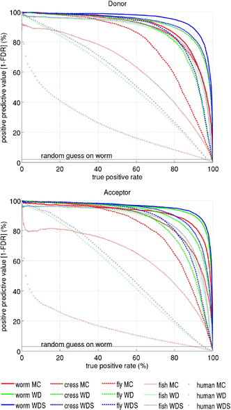 Precision Recall Curve for the three methods MC, WD, WDS estimated on the genome-wide data sets for worm, fly, cress, fish, and human in a nested cross-validation scheme. In contrast to the ROC the random guess in this plot corresponds to a horizontal line, that depends on the fraction of positive examples in the test set (e.g. 2% and 3% in the case of the worm acceptor and donor data sets, respectively).