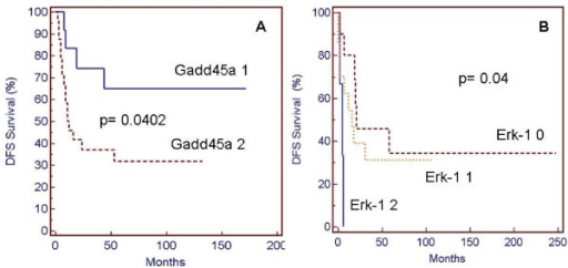 Kaplan Meier DFS percentage plots in AML patients and ALL/NHL patients according to Gadd45a expression (A) and Erk1 activation level (B). Gadd45a 1: score 1; Gadd45a 2: score 2. Erk-1 0: score 0; Erk-1 1: score 1; Erk-1 2: score 2.