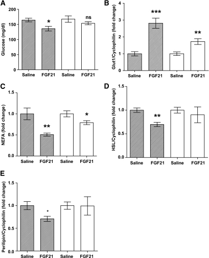 FGF21 has an impaired capacity to reduce serum glucose and NEFAs in obese mice. To analyze the impact of obesity-associated FGF21 resistance on the physiologic improvements we associate with FGF21 action, we looked at serum parameters that are acutely regulated by FGF21. The effect of FGF21 treatment on circulating glucose (A) and NEFAs (C) are shown in lean and obese mice. mRNA expression for genes regulating these parameters is also shown from epididymal WAT: GLUT1 (B), HSL (D), and perilipin (E). Data are displayed as the mean ± SE. *P < 0.05; **P < 0.01; ***P < 0.001. ■, Lean; □, obese.
