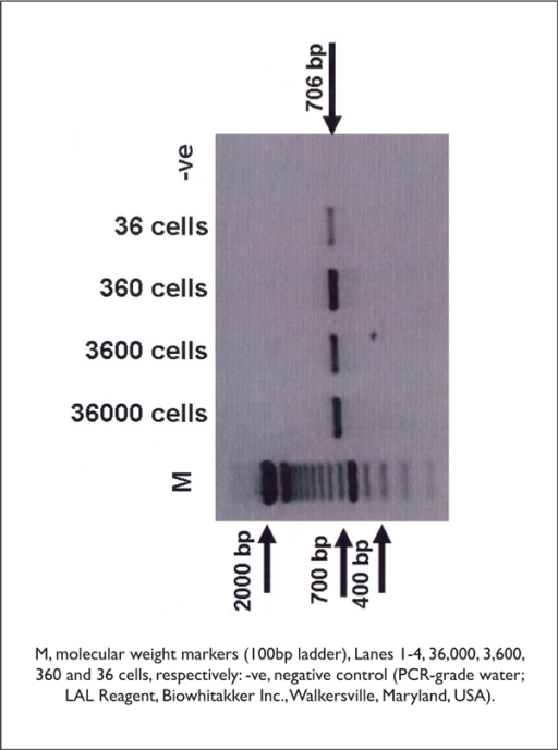 Sensitivity of the two-step PCR assay; PCR amplification of a 706 bp region of the 16S rDNA of Taylorella equigenitalis.