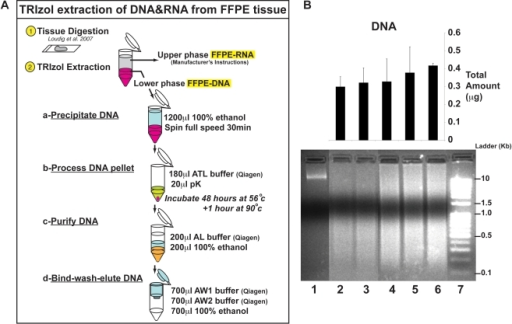 Optimized TRIzol extraction of DNA from archived specim ...