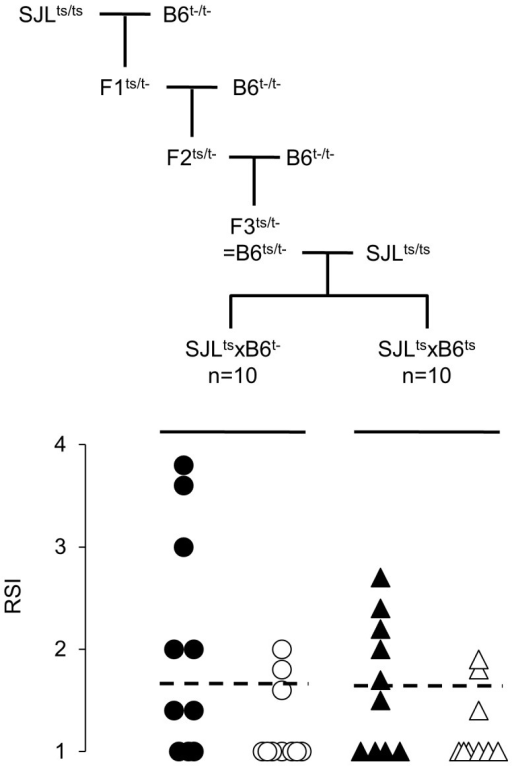 Mobilization of T cells depends on the polymorphism of TLR2.Upper section: transfer of TLR2 of SJL onto B6 background. SJL mice (homozygous for TLR2 of SJL, ts+/+) mice were crossed with B6tlr2− (t-). F1 mice (genotype ts/t-) were then backcrossed with B6tlr2− and F2 mice of genotype ts/t- are further backcrossed with B6tlr2− generating F3 mice ts/t- that share ≈90% of their genome with B6wt. These latter mice (B6ts/t−) were crossed with SJL mice to generate TLR2-heterozygous F1 (SJLtsxB6t−) and TLR2-homozygous F1 (SJLtsxB6ts) mice. Lower section: these two groups of littermates were immunized with p139 in regular CFA and 14 days later the presence of T cells carrying the public TCR-beta chain in LN (closed symbols) and spleen (open symbols) was examined by immunoscope, as described above. Ten mice per group were examined, and mice of each group derived from two distinct (B6ts/t−×SJL) couples. Data are reported as RSI for the peak corresponding to the public TCR-beta chain for each individual mouse. The cut off value for the RSI at 1.7 is indicated.