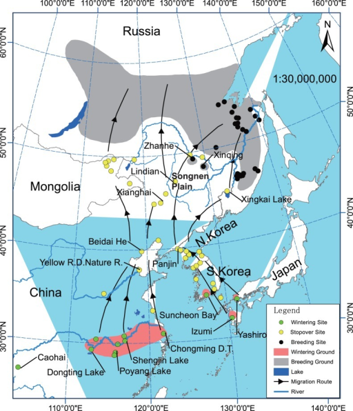 Map of Hooded Cranes distribution and migration routes.Data from The cranes: status survey and conservation action plan[9], Threatened birds of Asia[10], and field work in recent years.