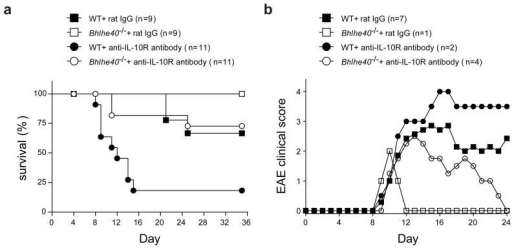 IL-10R blockade renders Bhlhe40−/− mice susceptible to EAEa, Survival of WT or Bhlhe40−/− mice after EAE induction and biweekly treatment with control rat IgG or anti-IL-10R antibody. Data are combined from 3 independent experiments. b, Mean clinical scores of EAE in diseased WT or Bhlhe40−/− mice treated biweekly with either control rat IgG or anti-IL-10R antibody. Data are combined from 3 independent experiments. Error bars are not shown for clarity. All s.e.m. values were ≤1.