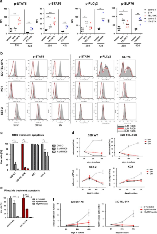 TEL–SYK induces activation of STAT5 in vivo. (a) Intracellular phospho flow cytometry for p-STAT5/6, p-PLCγ2 and p-SLP76 of GFP+ myeloid spleen cells coming from control, SYKwt, ITK–SYK and TEL–SYK-transplanted Balb/c mice. Graphs show the mean fluorescence intensity (MFI) per mouse. TEL–SYK shows highest activation of STAT5 and STAT6 in vivo, whereas SYK and ITK–SYK show a strong activation of PLCγ2 and SLP76. *P<0.05; **P<0.01; ***P<0.001, unpaired t-test. (b) Intracellular phospho-flow cytometry for phosphorylated STAT5/6, PLCγ2 and SLP76 of 32D TEL–SYK cells, KG-1 cells (AML cell line) and SET-2 cells (megakaryocytic leukemia cell line) treated with the SYK inhibitor R406 for 5 min, 30 min or 2 h. For p-STAT6, p-PLCγ2 and p-SLP76 only the 30 min time point is shown. (c) 32D cells with IL-3, 32D TEL–SYK cells without IL-3, KG-1 cells and SET-2 cells were all treated with R406 for 48 h and apoptosis was assessed by AnnexinV/7-AAD staining. Graph shows the mean relative percentage of viable cells (AnnexinV-/7-AAD-) compared with the dimethylsulfoxide (DMSO) control+s.e.m from three independent experiments (n=3). (d) Total viable cell numbers were assessed by counting the cells with a Neubauer counting chamber after treatment with SYK inhibitor over 48–72 h. Graphs are shown for the DMSO control, the 2 μM and the 4 μM R406 concentration for 32D cells+IL-3, 32D TEL–SYK cells without IL-3, KG-1 cells and SET-2 cells. (e) 32D BCR–ABL and 32D TEL–SYK cells grown without IL-3 were treated with 5 and 10 μM pimozide for 48 h and apoptosis was assessed by AnnexinV/7-AAD staining. Graph shows the mean relative percentage of viable cells (AnnexinV-/7-AAD-) compared with the DMSO control+s.e.m from three independent experiments (n=3). *P<0.05; **P<0.01; ***P<0.001, paired t-test. (f) Growth curves of 32D BCR–ABL and 32D TEL–SYK cells grown without IL-3 and treated with DMSO, 5 and 10 μM pimozide were performed over 48 h in three independent experiments (n=3) by counting Trypan blue negative cells in a Neubauer chamber.