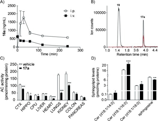 In vivo profile of 17 a. Plasma pharmacokinetic profile of 17 a after i.p. (10 mg kg−1) and i.v. (1 mg kg−1) administration in mice (A). Identification of 19 as primary in vivo metabolite of 17 a: superimposed MRM traces of a standard sample of 17 a (retention time 3.91 min, 1 μm calibrator, red trace) and a sample collected 1 h after i.p. administration of 17 a in mice (10 mg kg−1; black trace) (B). The peak at 1.4 min corresponds to the primary metabolite of 17 a (19, 227 Da molecular mass, m/z: 228 detected in ESI mode). Effects of 17 a (10 mg kg−1, 3 h) on AC activity in mouse tissues (C) and sphingolipid levels in lungs (D). Values are expressed as means ±S.E.M (n=6).