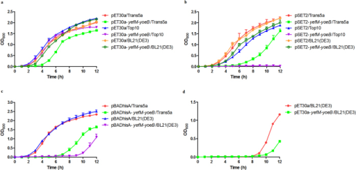 Effect of introduction of the S. suis yefM-yoeB system into E. coli.(a) Growth curves of E. coli strains carrying the pET30a-yefM-yoeB or pET-30a plasmid. Cells were grown in LB-kanamycin. (b) Growth curves of E. coli strains carrying the pSET2-yefM-yoeB or pSET2 plasmid. Cells were grown in LB-spectinomycin. (c) Growth curves of E. coli strains carrying the pBADhisA-yefM-yoeB or pBADhisA plasmid. Cells were grown in LB medium-ampicillin. (d) Growth curves of E. coli BL21(DE3) strain carrying the pET30a-yefM-yoeB or pET-30a plasmid. Cells were grown in LB-kanamycin and 1 mM IPTG. The data shown are averages with standard deviations for the results from three independent experiments.