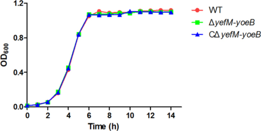 Growth curves of the WT, ΔyefM-yoeB and CΔyefM-yoeB strains.The WT, ΔyefM-yoeB and CΔyefM-yoeB strains were grown in TSB with 10% newborn bovine serum at 37 °C under static conditions. Samples were taken every hour to measure the OD600. The data shown are averages for the results from three independent experiments.