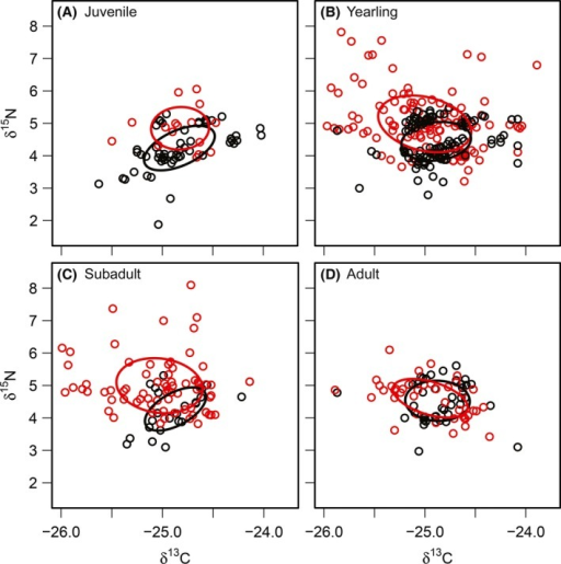Age‐structured differences in isotopic niche breadth (SEA) of lynx during marginal environmental conditions when snowshoe hare densities and lynx recruitment were low (red), and during good environmental conditions when snowshoe hare densities and lynx recruitment were high (black) for A) juvenile lynx, B) yearling lynx, C) subadult lynx, and D) adult lynx. SEA is the standard ellipse area.