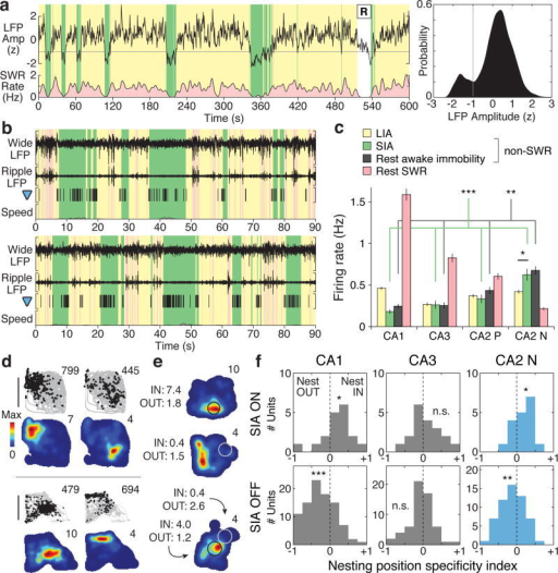 Hippocampal spatial coding in desynchronized sleepDetection of sleep states using hippocampal LFP. Left, 10-minute trace of aggregate hippocampal LFP amplitude during sleep, with times classified as LIA (yellow), SIA (green), or REM (R) periods. SWR rate was estimated by counting SWRs in 1-s bins and smoothing with a Gaussian (σ = 2 s). Right, kernel density estimate (Gaussian kernel, σ = 0.1) of aggregate hippocampal LFP amplitude during non-REM sleep for the recording epoch from which the plotted trace was taken. Grey line: amplitude threshold used to distinguish SIA (below threshold) and LIA (above threshold) periods. b, Sleep firing in two example CA2 N units. Top traces: wide-band LFP (Wide, 0.5-400 Hz, scale bar: 2 mV) and ripple-band LFP (Ripple, 150-250 Hz, scale bar: 300 μV) traces from a simultaneous recording in CA1. SWR, LIA, and SIA periods are plotted as pink, yellow, and green zones, respectively. Grey-filled trace (y-axis: 0 to 10 cm/s): head speed. Subsequent analysis in d-f indicated that SIA firing was dependent on whether the location at which the animal slept was near the spatial firing field of the CA2 N unit. c, Mean firing rates during rest epochs (mean ± s.e.m.; # of units: CA1: 400, CA3: 220, CA2 P: 126 units, CA2 N: 76 units). CA2 N units fired more during SIA than LIA (p = 0.011, signed-rank) and at higher rates than other unit populations during SIA periods (green) and during awake immobility periods (grey) (Kruskal-Wallis ANOVA, Tukey's post hoc tests; p < 0.001 for SIA; p = 0.0051 for awake immobility). As in Fig. 2c, these comparisons indicate population-level engagement in sleep states, encompassing both higher and lower rate firing as a result of spatially specific firing in single units. Asterisks: *, p < 0.05; **, p < 0.01; ***, p < 0.001. d, Example spatial firing maps of two pairs of simultaneously recorded CA2 N units in the rest environment. Data from waking periods plotted. Upper plots: positions visited (grey) and positions where the unit fired (black points). Total number of spikes is reported at upper right. Lower plots: occupancy-normalized firing maps. Peak spatial firing rate is reported at upper right. Scale bar: 20 cm. e, Three example CA2 N units coding for nesting position. Shown are occupancy-normalized firing maps from awake periods in a rest recording epoch. Indicated on each map is the nesting position (circle, 5 cm radius) of the subject for a sleep period detected in the same recording epoch. For a given sleep period, the unit was classified either as SIA ON (>2 Hz firing rate during SIA; black circle) or SIA OFF (<2 Hz; white circle). Reported at left are the mean awake firing rates within (Nest IN) and outside (Nest OUT) the encircled nesting region. In the third example, two distinct nesting positions corresponding to two distinct sleep periods were observed. f, Nesting position specificity index distribution in CA1, CA3, and CA2 N unit populations. The CA1 and CA2 N populations met dual criteria (see Supplementary Methods) for nesting position coding, while the CA3 unit population did not. Mean ± s.e.m.: CA1, SIA ON (n = 18 units): 0.18 ± 0.09, p = 0.043; CA1, SIA OFF (n = 92): -0.26 ± 0.04, p < 10-6; CA3, SIA ON (n = 19): 0.09 ± 0.09, p = 0.47; CA3, SIA OFF (n = 58): -0.04 ± 0.04, p = 0.50, signed-rank; CA2 N, SIA ON (n = 18): 0.18 ± 0.06, p = 0.020; CA2 N, SIA OFF (n = 57): -0.12 ± 0.04, p = 0.0087. All statistical tests were signed-rank. Asterisks: *, p < 0.05; **, p < 0.01; ***, p < 0.001 or p ≪ 0.001; n.s., not significant at p < 0.05.