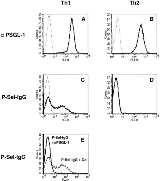 FACS® analysis of  Th1 and Th2 cells with P-selectin–Ig and antibodies against  PSGL-1. Th1 and Th2 cells (as  indicated) were analyzed by flow  cytometry either with affinitypurified rabbit antibodies against  mouse PSGL-1  (A and B, solid  lines) or with P-selectin–Ig (C and  D, solid lines). Dotted lines show  negative control staining either  with nonimmune rabbit IgG (A  and B) or with human IgG (C  and D). E shows the staining of  Th1 cells with P-selectin–IgG  after preincubation of the cells  either with nonimmune rabbit  IgG (faint line) or with affinitypurified rabbit anti–PSGL-1 antibodies (bold line). P-selectin–Ig  was detected with PE-conjugated  F(ab′)2 donkey anti–human IgG,  and rabbit antibodies were detected with FITC-conjugated  goat anti–rabbit IgG.