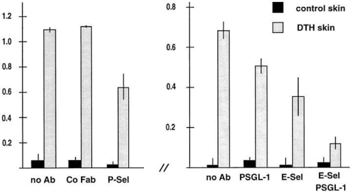 Partial inhibition of Th1 cell immigration into inflamed skin  by antibodies against PSGL-1. Radiolabeled Th1 cells were injected together with PBS (no Ab) or the same buffer containing 100 μg of nonimmune rabbit IgG Fab fragments (Co Fab), 100 μg of affinity-purified  anti–PSGL-1 Fab fragments (PSGL-1), 200 μg of mAb RB40 against  mouse P-selectin (P-Sel), 200 μg of mAb UZ4 against mouse E-selectin  (E-Sel). Immigration of cells into the noninflamed control skin region of  the same mice is depicted as solid bars. For each determination, four mice  were analyzed. Experiments shown by the left graph were performed  with a different preparation of Th1 cells than the experiments depicted by  the right graph. Numbers on the left refer to the percentage of injected  cells that were found in the analyzed skin area of 2.5 cm2.
